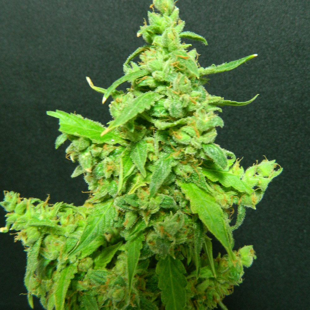 Thc в конопле где купить марихуану в аликанте